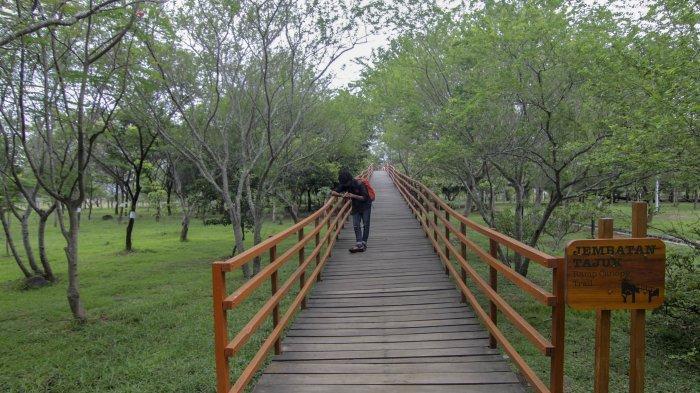 Hutan Kota Tibang Laboratorium Bagi Warga Kota Dan Pelajar Halaman All Serambi Wiki