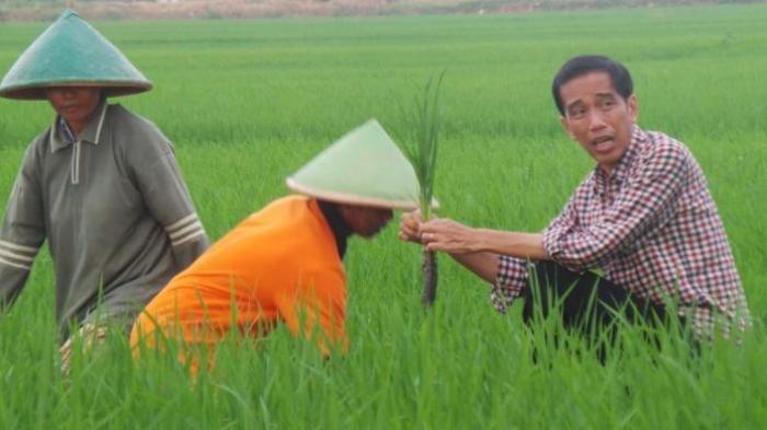 Jejak Jokowi di Aceh, Hingga Bupati Bener Meriah Abuya Sarkawi Usulkan Pembangunan Museum