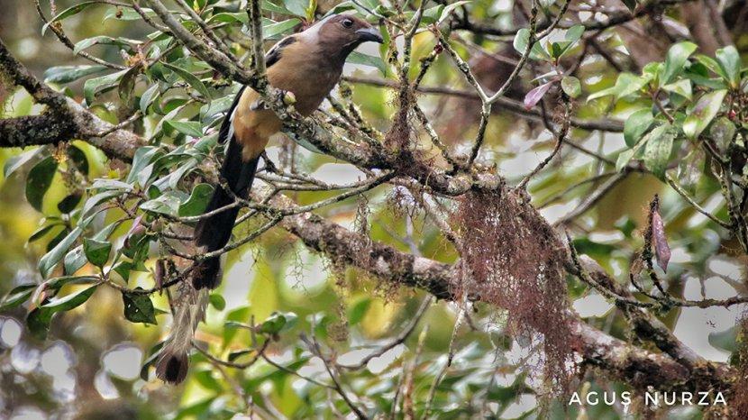 Damaran Baru Ecovillage Nominasi API Award 2020, Dihuni 11 Spesies Burung Endemik Sumatera