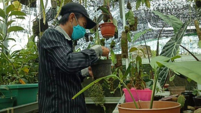 Andre warga Desa tondok Bakaru pengusaha tanaman hias
