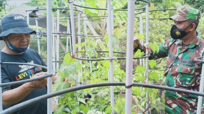 Babinsa Bersama Kades Banato Rejo Kembangkan Anggur Import