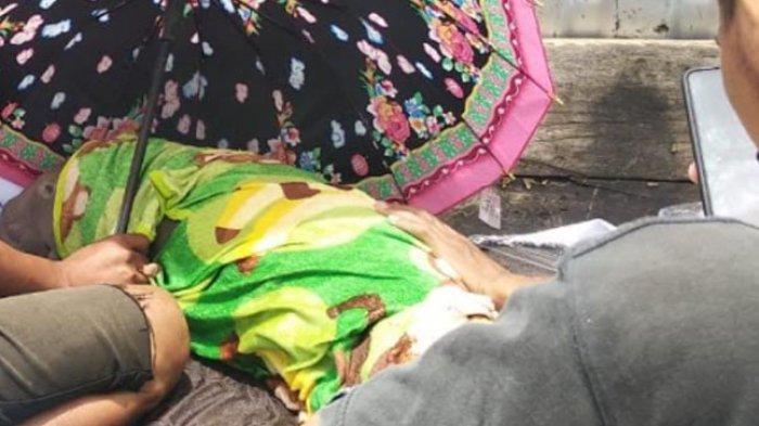 Terdampar, Bayi Dugong Dirawat dan Diberi Susu Bayi di Rumah Penyu Mampie Polman