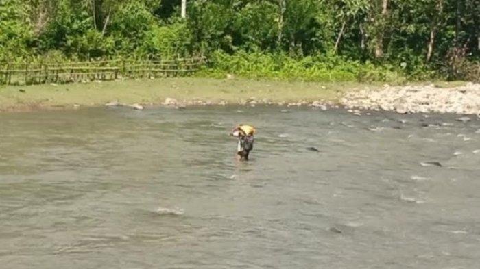 Jembatan Gantung Rusak, Warga Desa Pamoseang Mamasa Pikul Hasil Tani Lewat Sungai