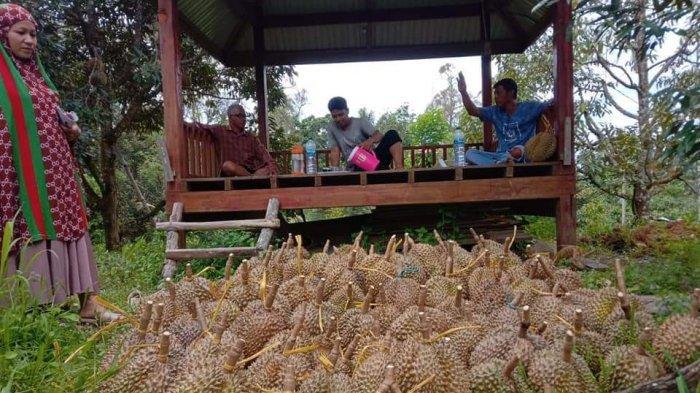 6 Jenis Durian Unggulan, Salah Satunya Banyak di KRB Polman