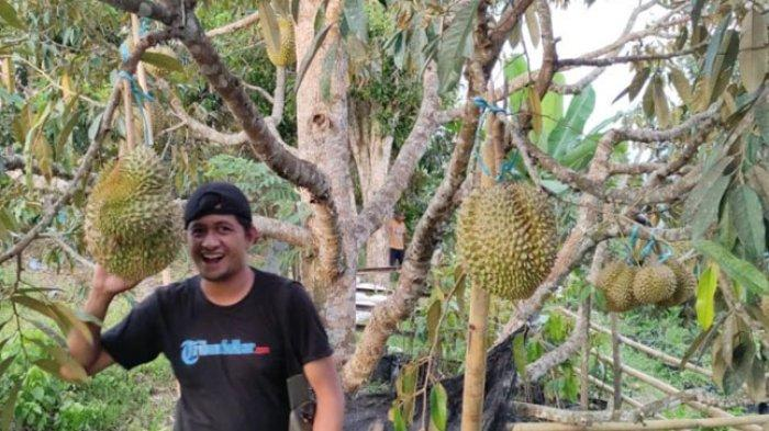 Kebun Raya Bulo Polman Tawarkan Durian Montong Thailand hingga Cabe Terpedis di Dunia