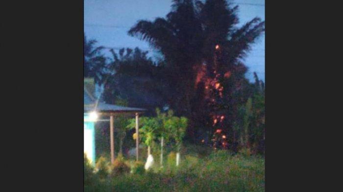 Video dan Foto Pohon Aren di Polman Terbakar Disambar Petir Beredar di Facebook