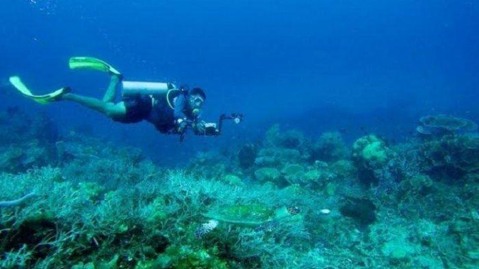 Pulau Karampuang Sulbar, Sajikan Panorama Bawah Laut Soft Corral dan Hard Corral