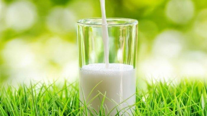Termasuk Obat Anemia, Ini 6 Manfaat Susu Kambing untuk Kesehatan