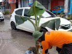 Akses-Jl-Abdul-Malik-Pattana-Endeng-menuju-Kantor-Gubernur-Sulbar-ditanami-pohon-pisang.jpg