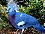 Burung-mambruk-endemi-Papua.jpg