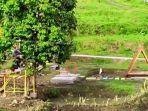 Flying-Fox-Taman-Malaqbi-Grand-Park-MGP-Sulawesi-Barat-Sulbar-mulai-diuji-coba.jpg