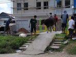 Panitia-Kurban-sedang-membawa-seekor-sapi-untuk-disembelih-di-pelataran-Masjid-Aswaja-Masudiyah.jpg
