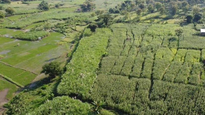Taman Wisata Airlangga Lamongan Segera Digarap Libatkan Kemenristek