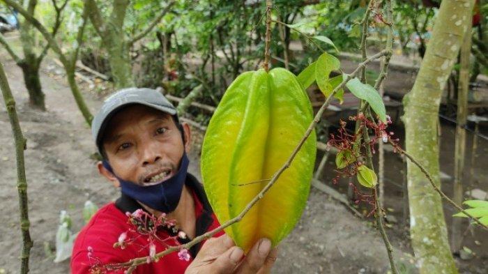 Agrowisata Belimbing Karangsari Kota Blitar Buka Kembali