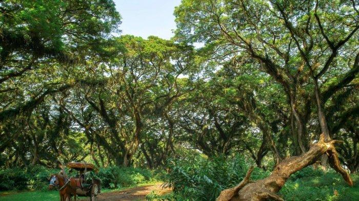 Angkutan Gratis Ke Sejumlah Destinasi Wisata Di Banyuwangi, Ini Syaratnya
