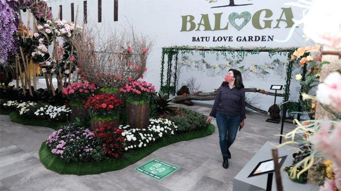 Menjelajahi Surga Bunga di Batu Love Garden (Baloga)
