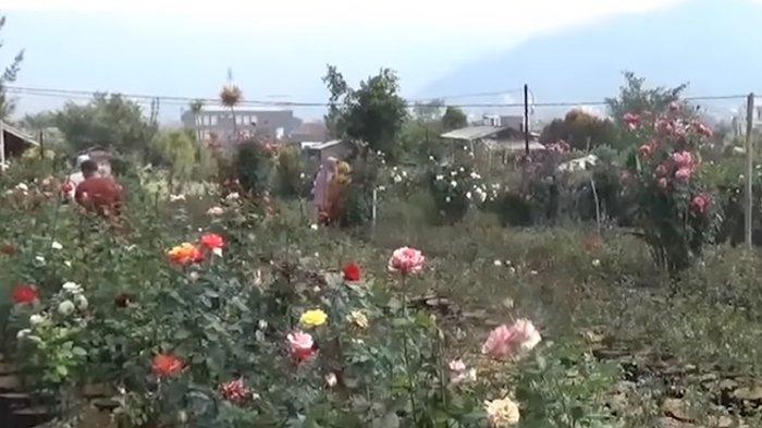 Kondang Sebagai Kawasan Pertanian Bunga, Desa Sidomulyo Kota Batu Kukuhkan Diri Sebagai Desa Wisata