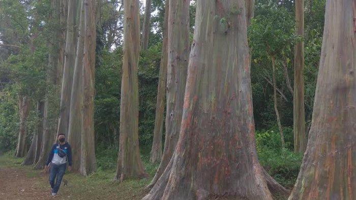Eksotisme Hutan Pelangi di Bondowoso yang Memikat Pengunjung