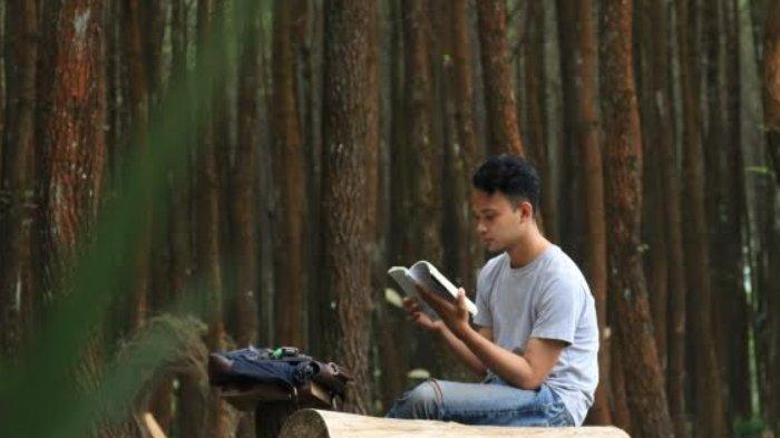 Merasakan Kedamaian di Hutan Pinus Pelosok Kabupaten Malang