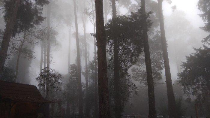 Wisata Pendakian Gunung Lawu  Uji Coba Dibuka Melalui Candi Cetho dan Cemara Kandang