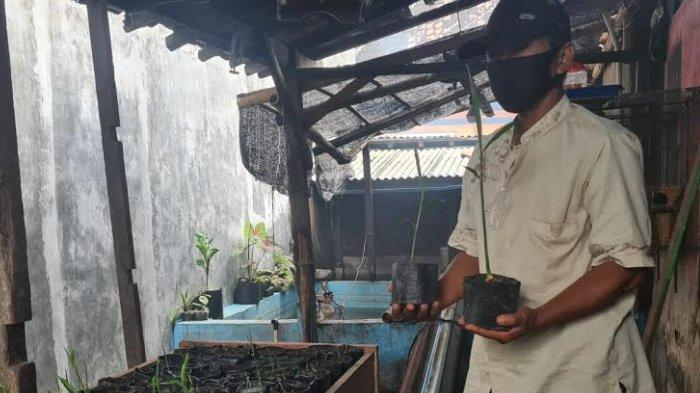 Dimulai 15 Warga, Kelurahan Tukangkayu di Banyuwangi Kini Jadi Kampung Jahe