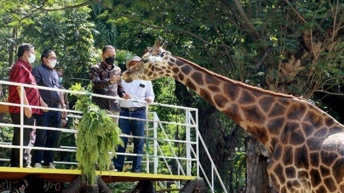 Kebun Binatang Surabaya Besok Minggu Siap Buka Kembali Walikota Eri Cahyadi Cek Kesiapan