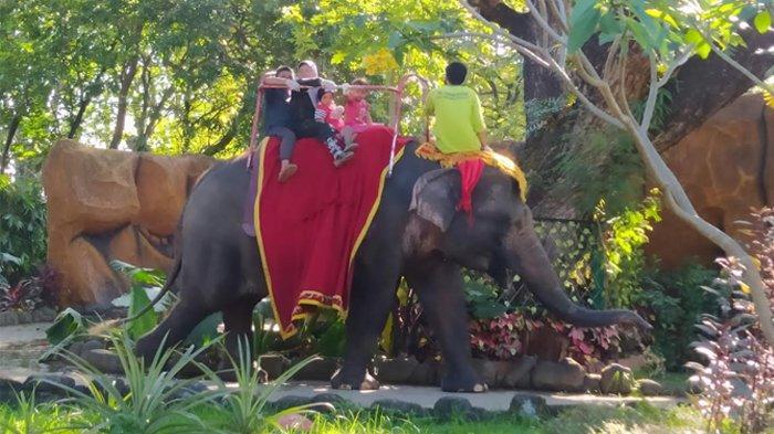Kebun Binatang Surabaya Jadi Jujugan Warga Sekitar Surabaya Mengisi Waktu Libur Lebaran Hari Kedua