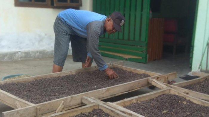 Cita rasa khas Kopi Java Ijen Raung Bondowoso Mendunia