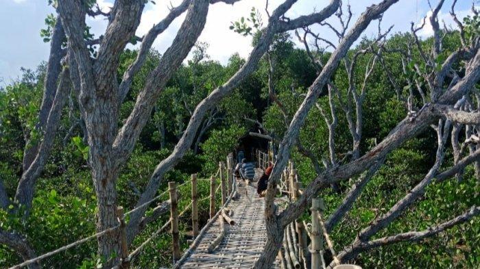 Desa Wisata Hutan Mangrove di Kecamatan Sreseh, Sampang Inovasi Warga Ditengah Pandemi