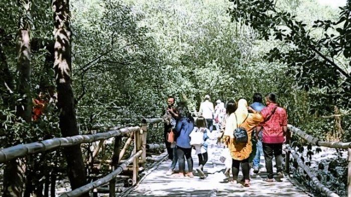 Ekowisata Mangrove Wonoresjo Mulai Dpadati Pengunjung Luar Kota Surabaya