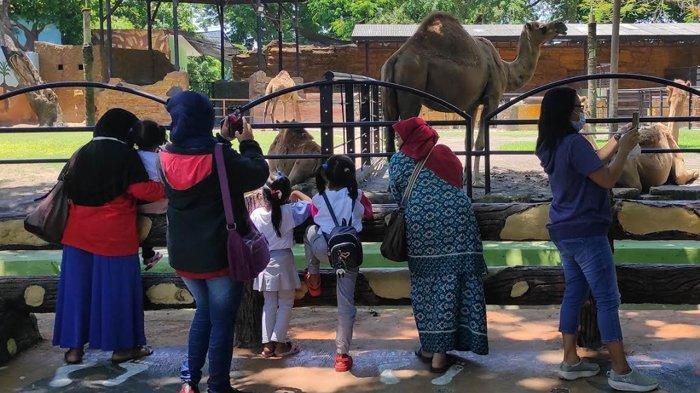 Kebun Binatang Surabaya (KBS) Mulai Dipadati Pengunjung