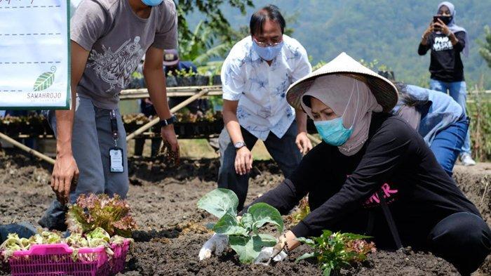 Sawah Rojo Art Farming di Kota Batu, Perpaduan Lahan Pertanian, Teknologi, dan Seni