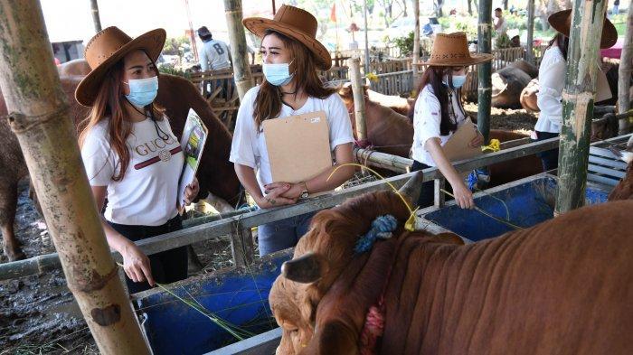 Tantangan SPG Cantik Tawarkan Hewan Ternak Kurban Langsung Di Lokasi
