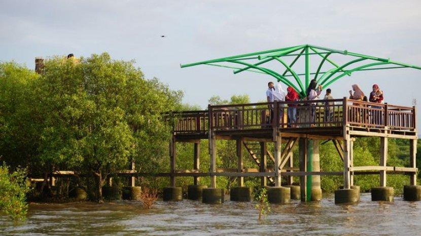 Desa Wisata Kampung Blekok Situbondo Konservasi Mangrove  Dan Ribuan Burung Air Ada Disini