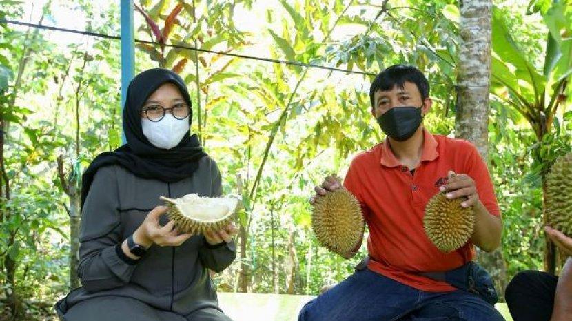 Manis Legit Durian Boneng Banyuwangi Diburu Penggemar Durian