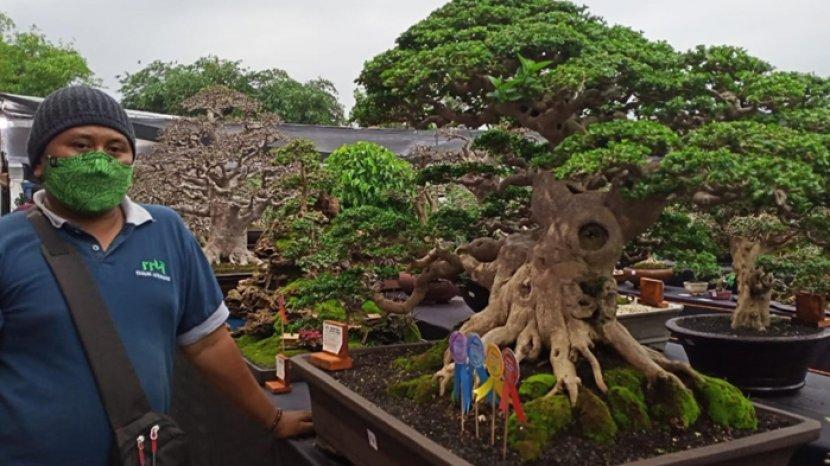Penghobi Bonsai Lumajang Gelar Pameran Lokal Tapi Rasa Nasional