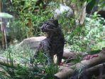 macan-dahan-batu-secret-zoo.jpg