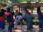 pengunjung-kebun-binatang-surabaya.jpg