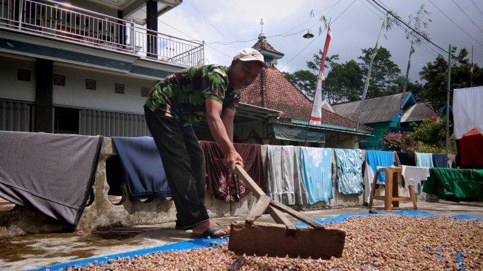 Sempat Dianggap Tanaman Parasit, Ini Kisah Petani Lumajang Merintis Budidaya Kapulaga