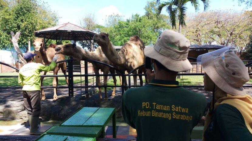Kebun Binatang Surabaya Gelar Wisata Virtual Family Untuk Orng Tua dan Anak-anak