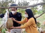 Kebun-Durian.jpg