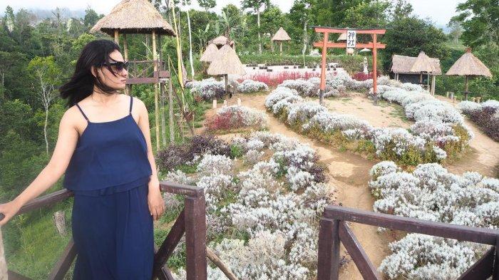 Wow Taman Bunga Edelwis Hadir di Taman Jinja Besakih