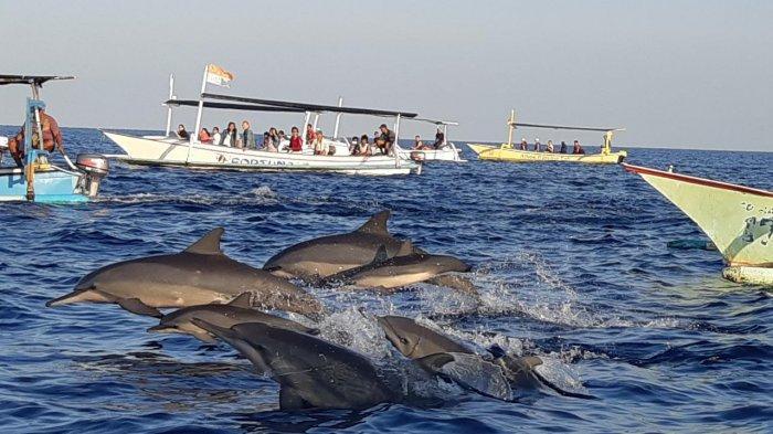 Serunya Sensasi Melihat Lumba-lumba di Pantai Lovina