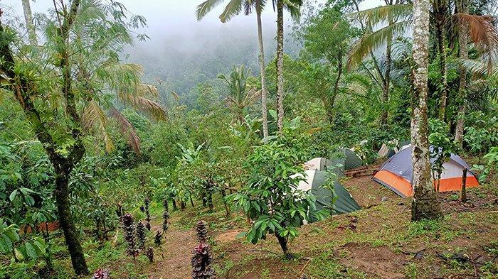Educational Camp di Muncak Sari, Sensasi Nge-Camp di Areal Kebun Kopi