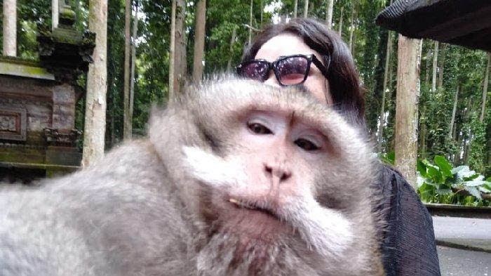 Serunya Selfie Bersama Monyet di Sangeh