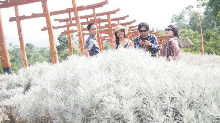 Taman Jinja Tawarkan Hamparan Edelwis Ala Korea