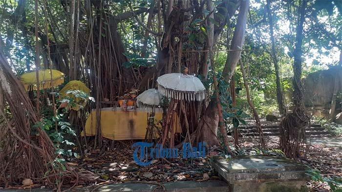 Kisah Pohon Bunut Suci di Taman Festival Bali, Memohon Rezeki Hingga Memohon Anak