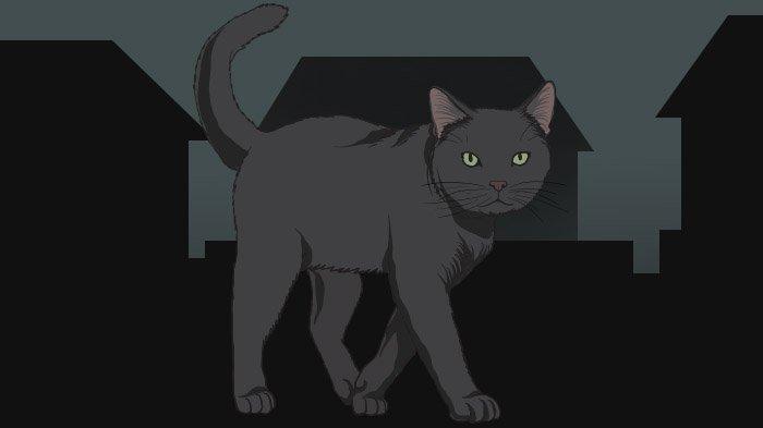 Kucing Hitam Sering Dikaitkan dengan Hal Mistis dan Nasib Buruk,Berikut Legendanya