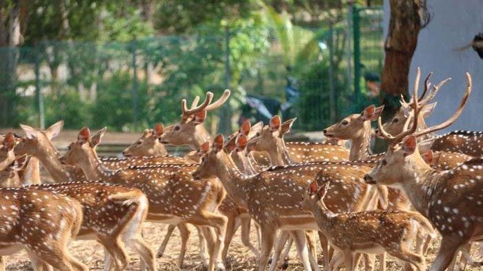 Keindahan Taman Rusa Sekupang, Sediakan Spot Foto Instagramable dan Jogging Track