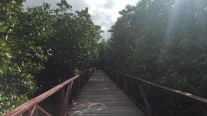 Desa Batu Ampar Menyimpan Wisata Hutan Mangrove Asri, Jadi Destinasi Gratis di Anambas